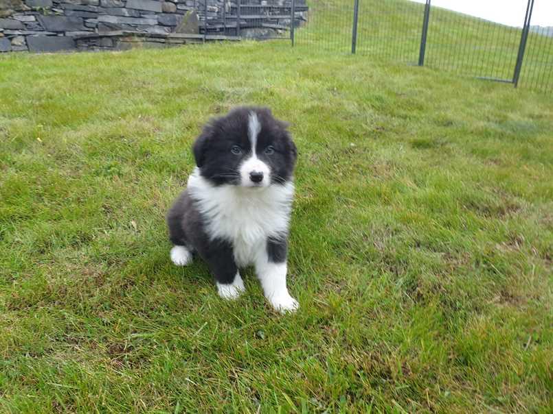 Jasper in the garden