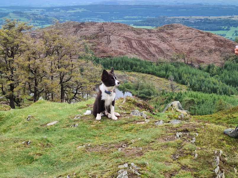 Jasper on a hike