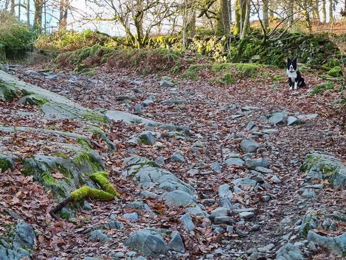 Jasper on the rocky trail near Elterwater