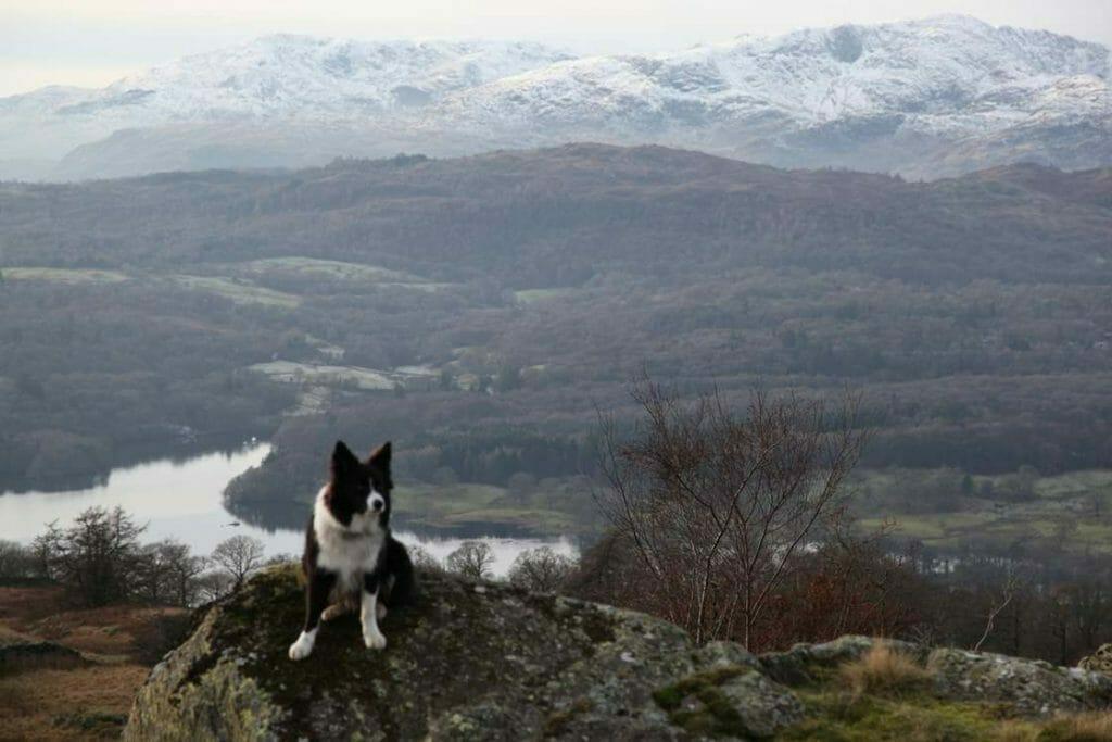 Jasper on Wansfell