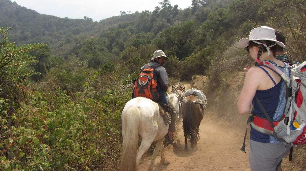 Horses for hiking in Peru