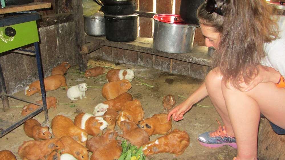 Rebecca petting the guinea pigs