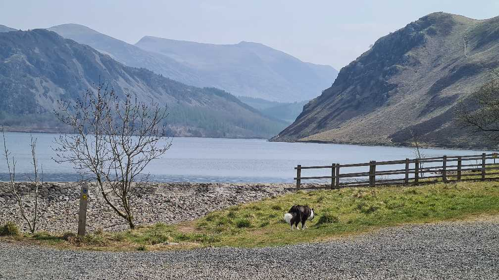 Hiking round Ennerdale Water with the pup