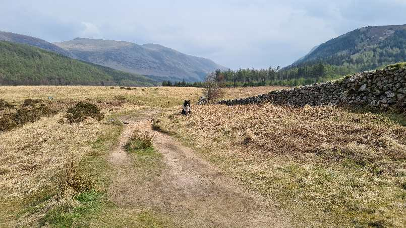 Jasper on trail at end of Ennerdale Water