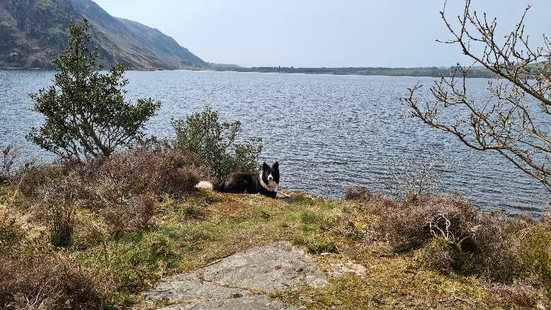 Jasper at side of Ennerdale Water