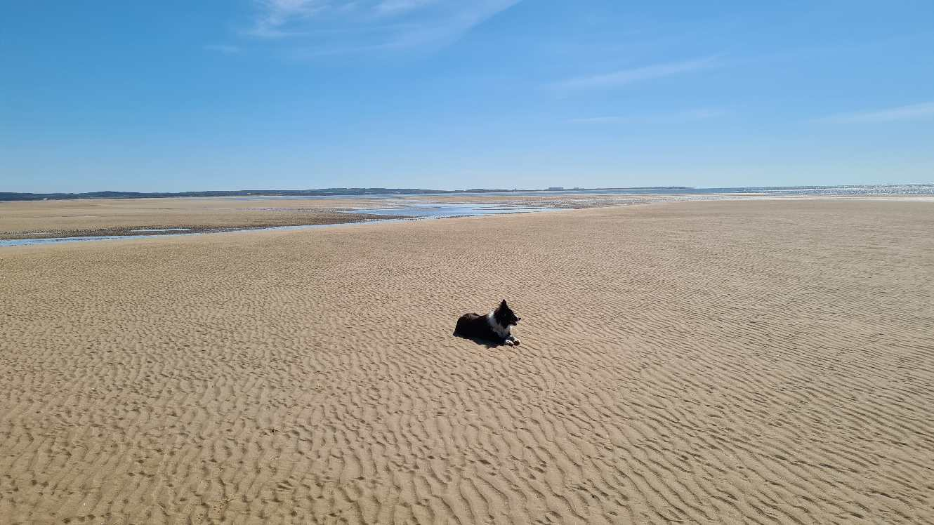Dog on the beach at Silecroft on the West Coast of Cumbria