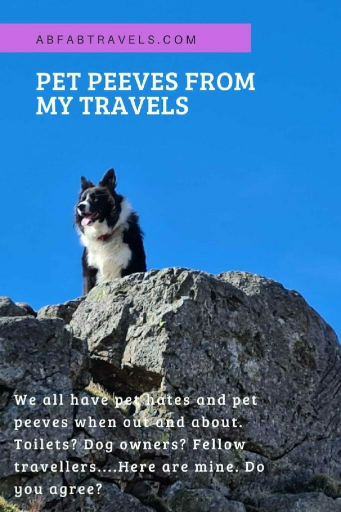 Pin image for pet hates post: dog on rock