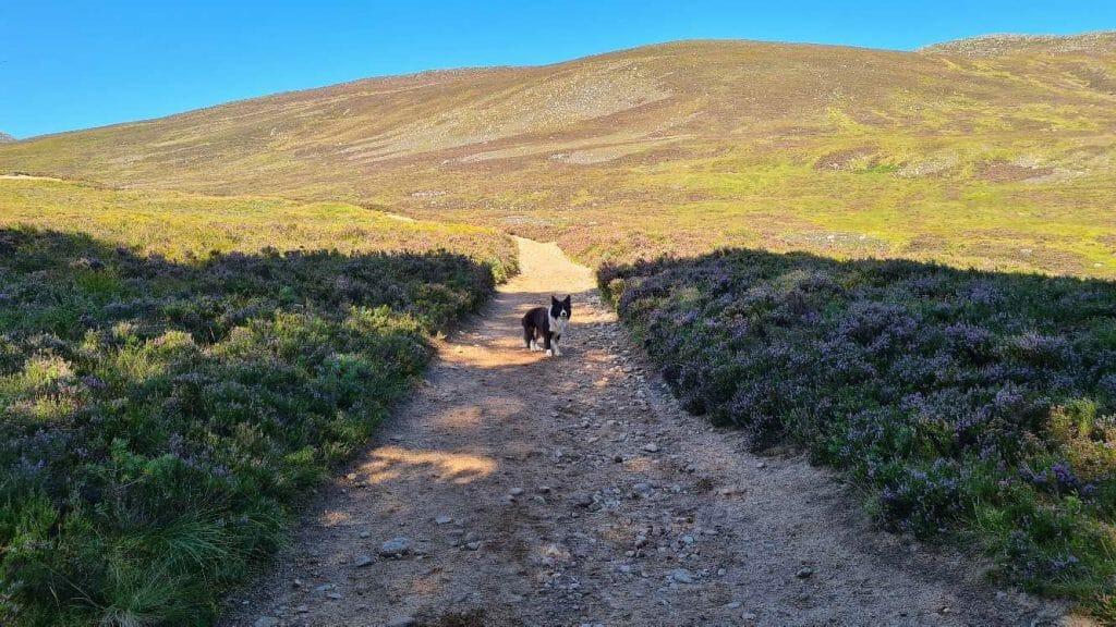 Pup on sandy path on Lochnagar, best hike in Scotland